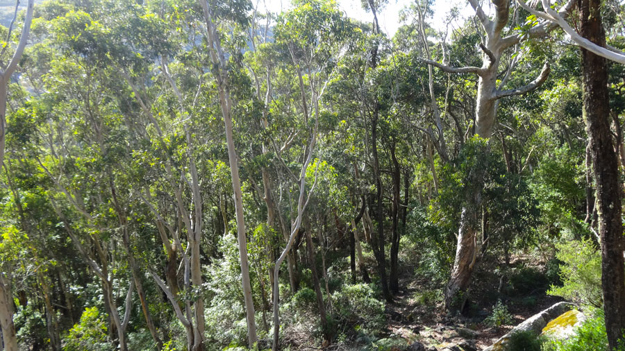 der weg wieder bergrunter, Porongurup NP, Wandern Australien