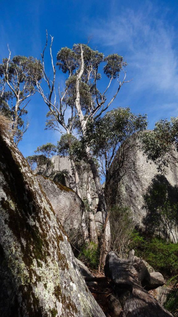 Weg zum Granite Skywalk: Fels- und Waldlandschaft, Porongurup Nationalpark, Wandern Australien