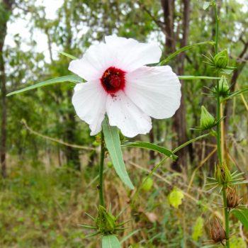 Wilblume Kakadu Nationalpark Australien