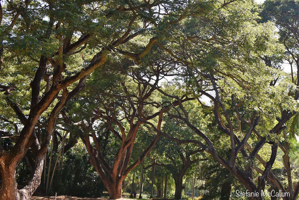 Wäldchen im George Brown Darwin Botanic Garden