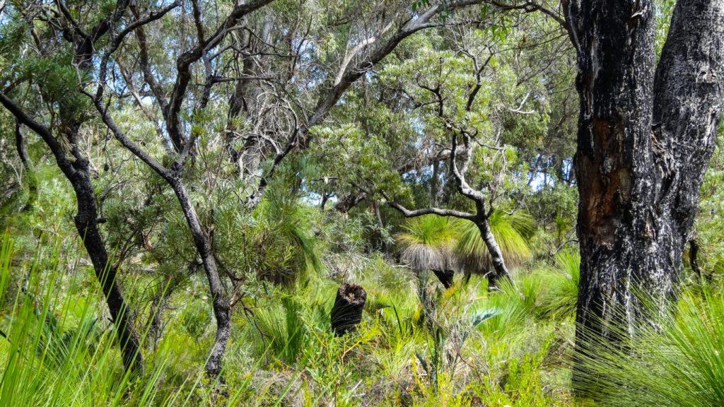 Buschlandschaft, Yanchep-NP, Australien
