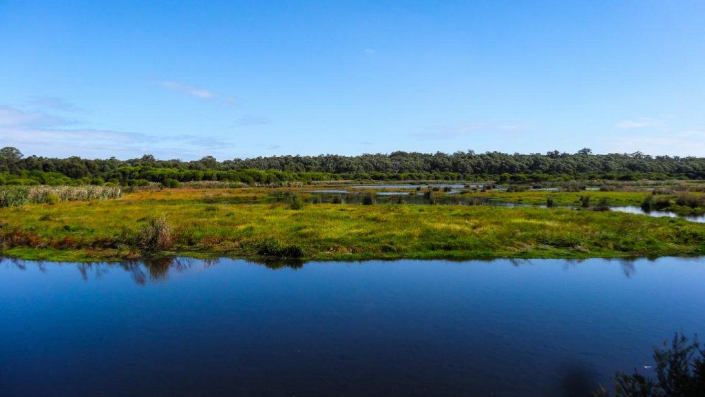 Lake McNess im Yanchep NP, Australien