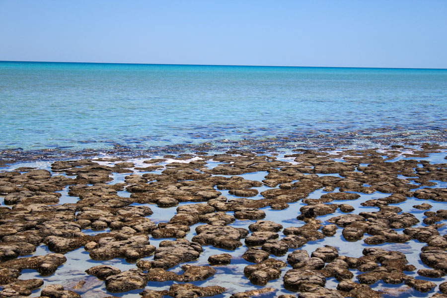 Stromatoliten in Shark Bay, Australien