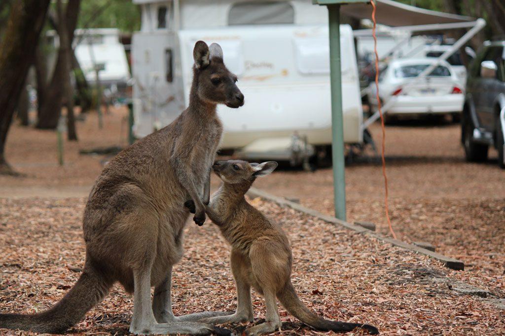 Tierwelt beim Camping