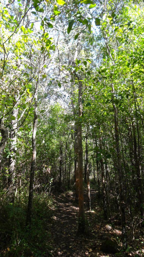 Porongurup Natinalpark - Weg zum Granite Skywalk, Wandern Australien