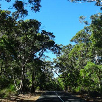 Waldlandschaft im Süden Australien