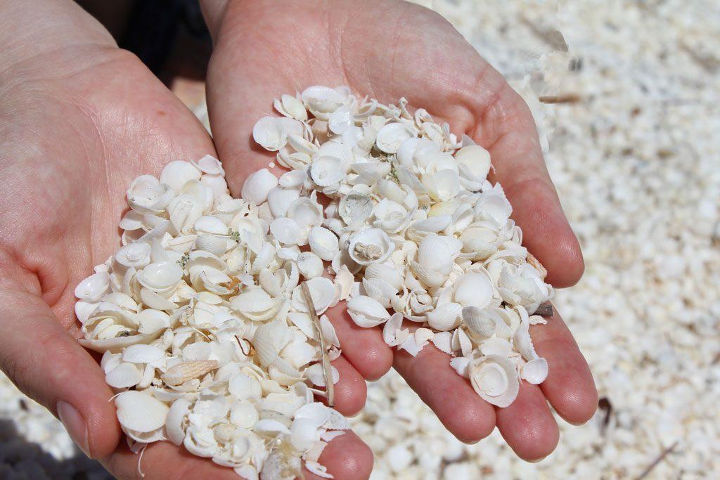 Muscheln am Shell Beach, Shark Bay in Western Australien