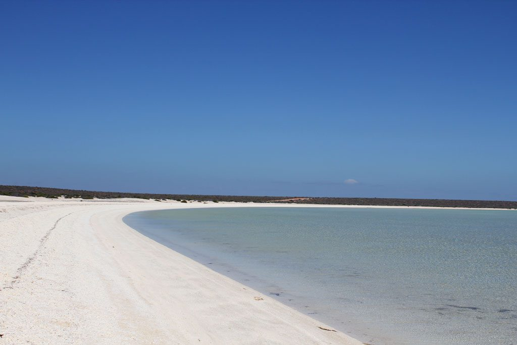 40 km langer Shell Beach in der Shark Bay