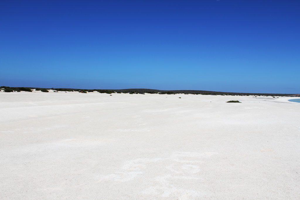 Shell Beach an der Shark Bay