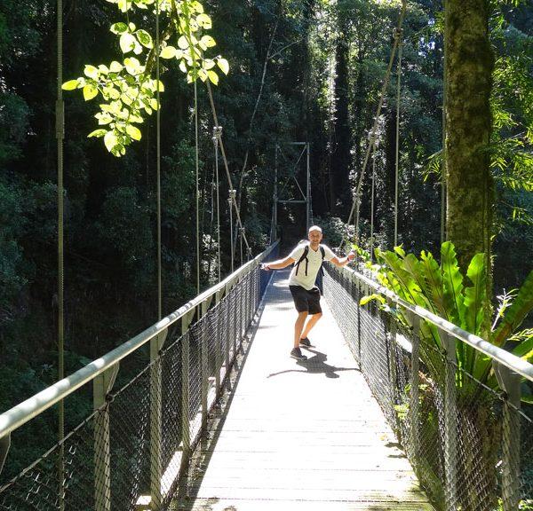Hängebrücke auf dem Wanderweg im Dorrigo NP