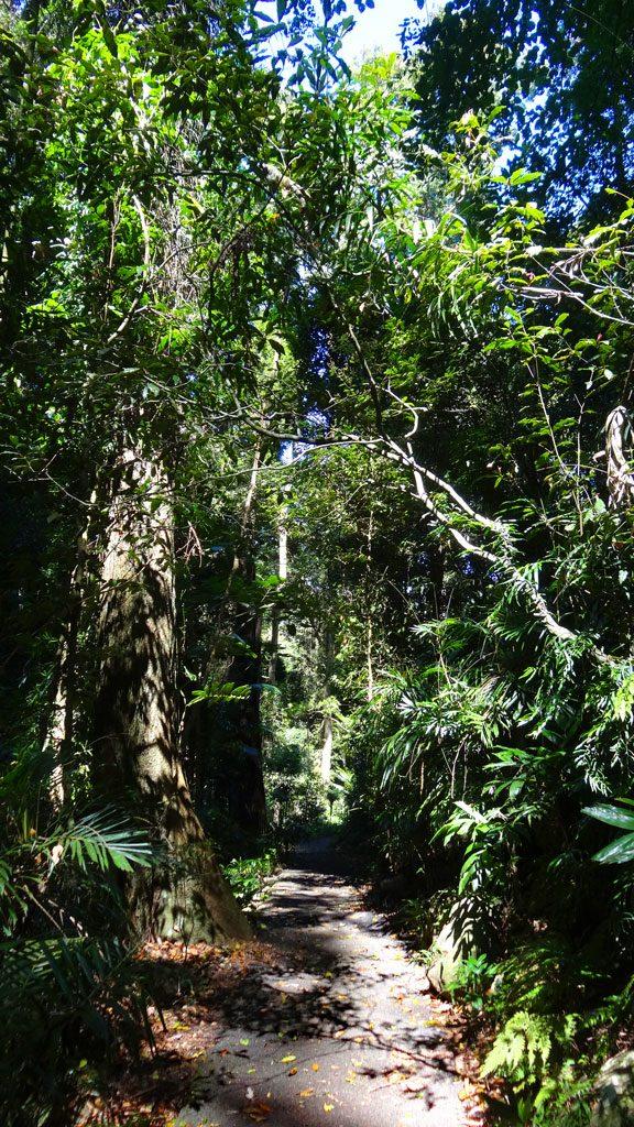 Regenwald im Dorrigo NP