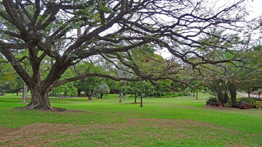 Ausblcik auf die Grünflächen im City Botanic Garden