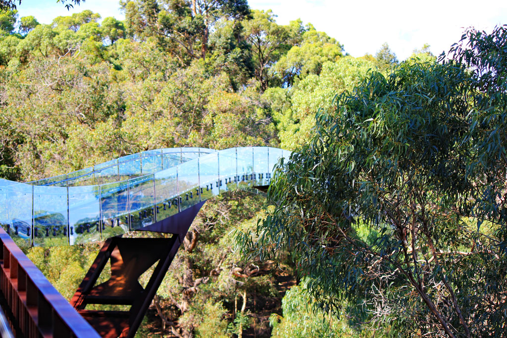 Tree Top Walk Hängebrücke im Kings Park