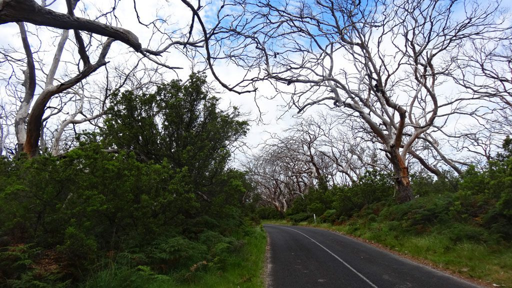 Die Lighthouse Road im Cape Otway Nationalpark