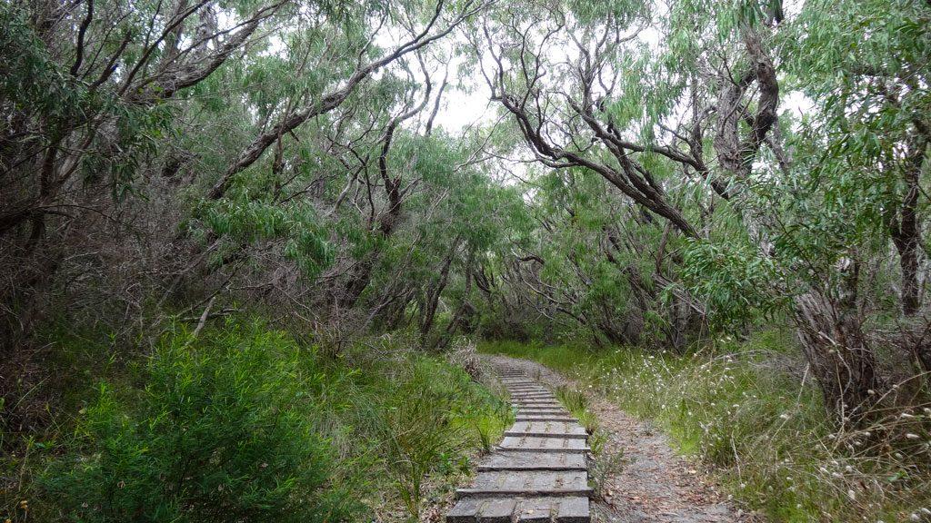 Start Bald Head Walk zum Isthmus Hill im Torndirrup Nationalpark