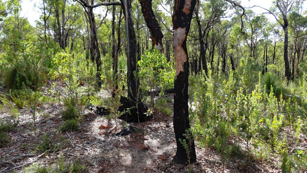 Kontrollierter Buschbrand im John Forrest Nationalpark