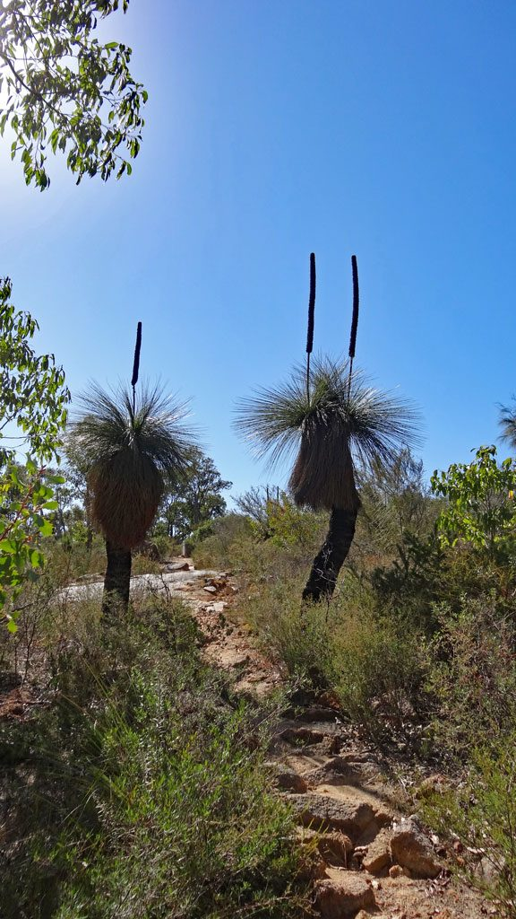 Buschlandschaft auf dem Eagle View Walk