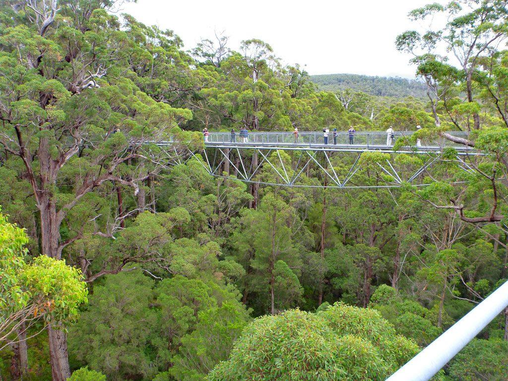 Valley of the Giants in Walpole, Western Australia