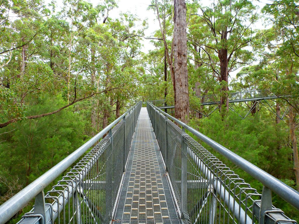 Brücke im Valley of the Giants - Tree top Walk