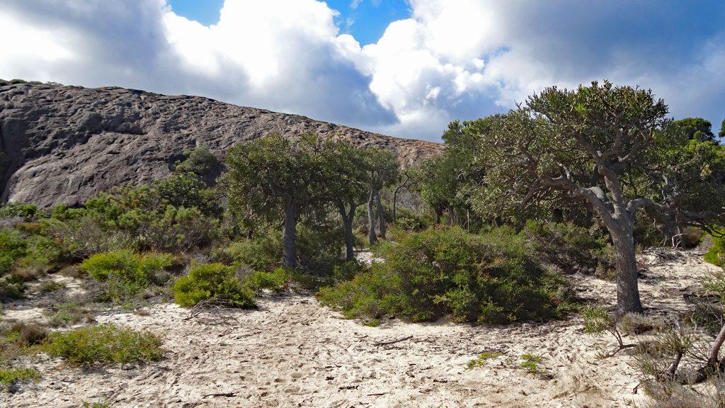 Wanderweg Coastal Walk Cape Le Grand Nationalpark Esperance
