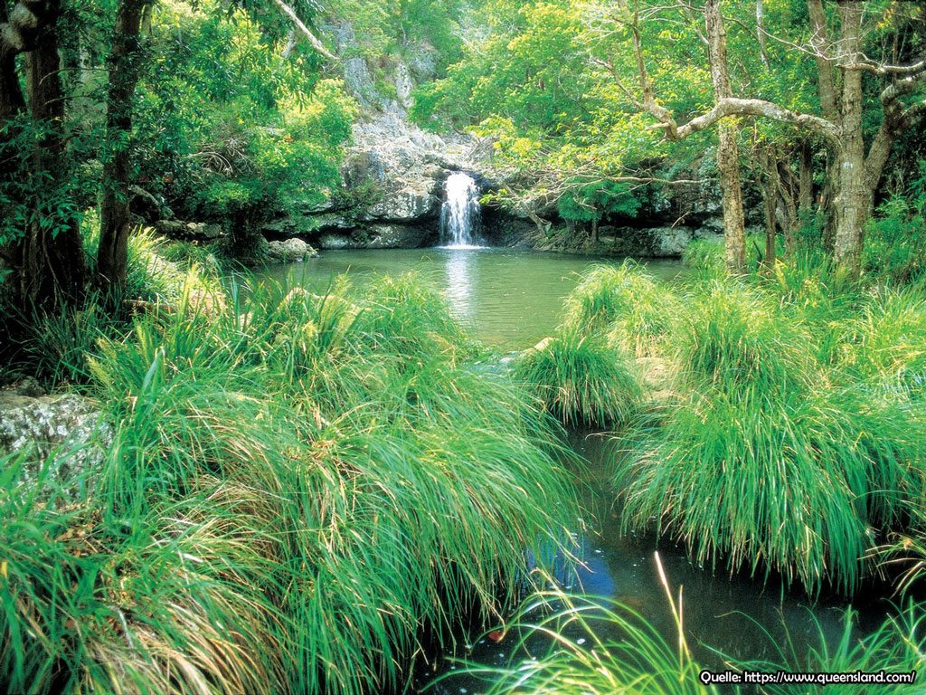 Kondalilla Nationalpark Circiut Trail