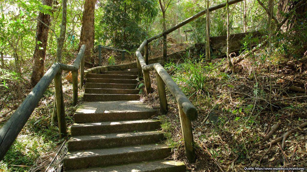 Kondalilla Nationalpark