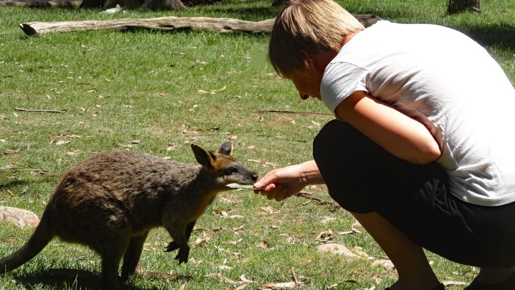 Känguru Gorge Wildlifepark Hahndorf