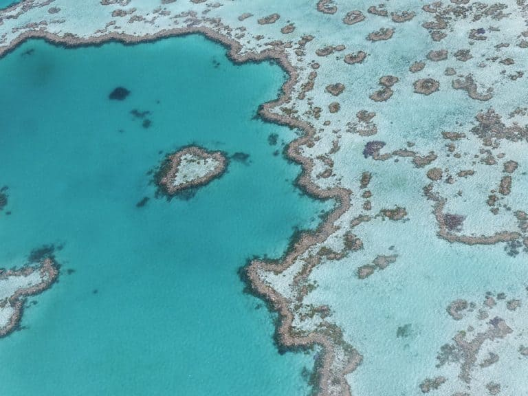 Haert Reef im Great Barrier Reef, Airlie Beach. Queendland, Australien