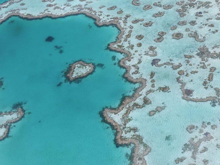 Haert Reef im Great Barrier Reef, Airlie Beach. Queendland, Australien