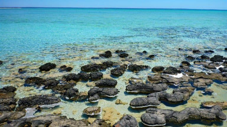 Hamelin Pool, Stromatolithen, Shark Bay, Western Australia