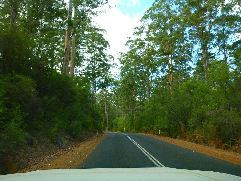 Beedelup Forrest - Highlights Südküste Australien