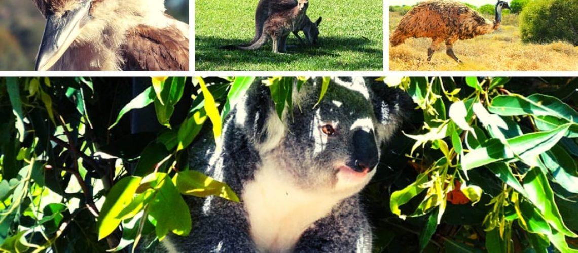 Tierbegegnungen Australien